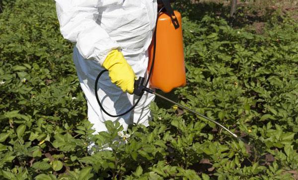 меры безопасности при обработке картофеля