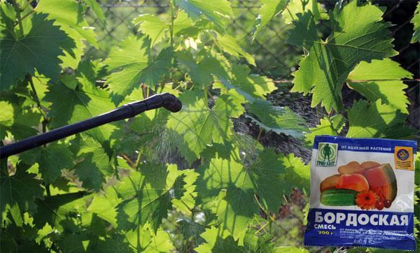 опрыскивание винограда раствором