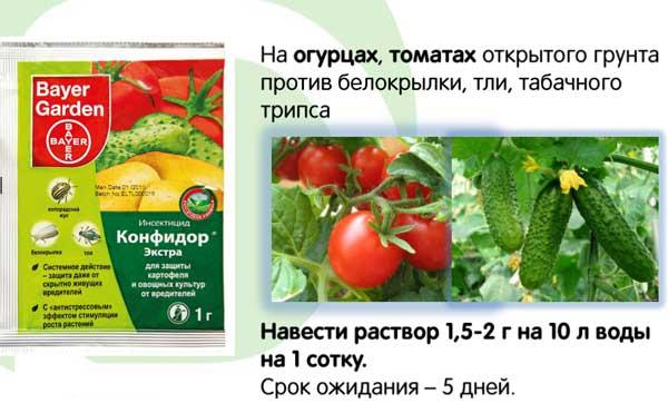 правила обработки конфидором экстра томатов и огурцов