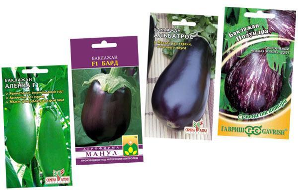 сорта и гибриды баклажанов для выращивания в теплице