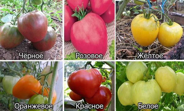 виды томатов Бычье сердце