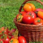 Польза и вред помидора для организма: калорийность, противопоказания
