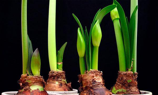 период интенсивного роста