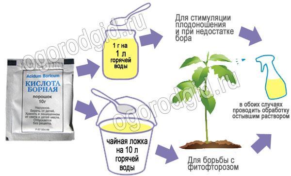 борная кислота для томата