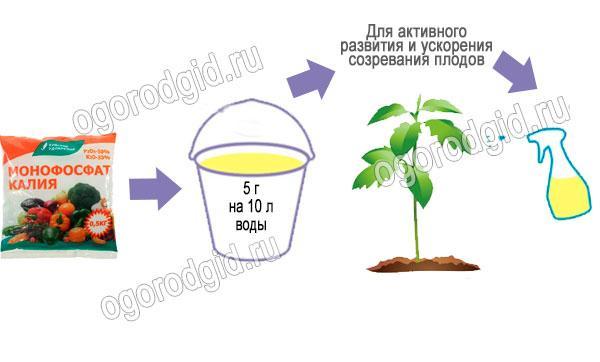 монофосфат калия для томата
