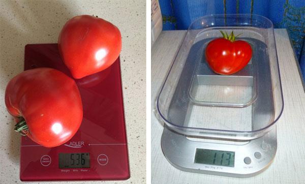 крупные плоды томата