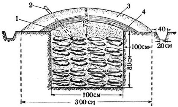 земляная яма для хранения морковки