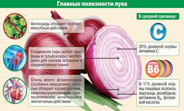 полезные свойства лука