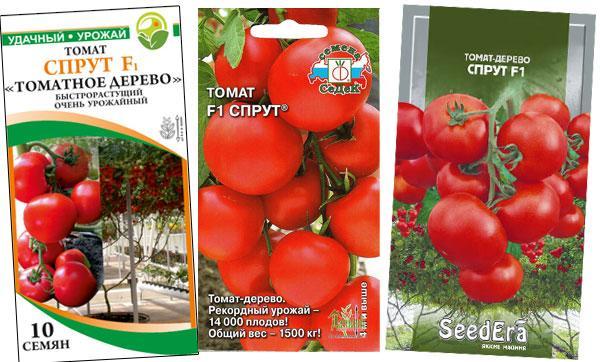 семена томатного дерева