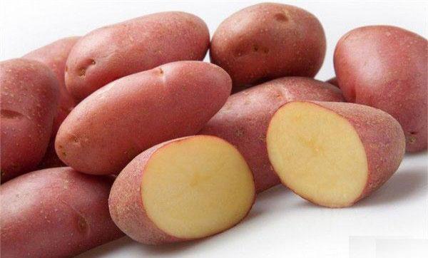 картофель Ред Скарлет