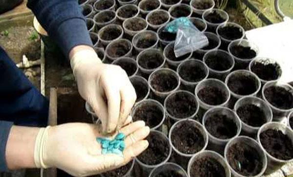 посев семян кабачка