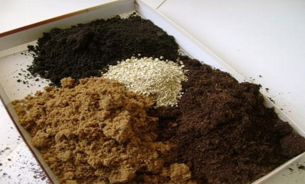 почва для рассады перца