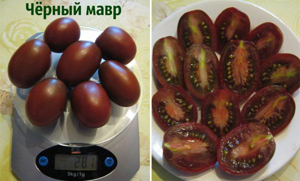 урожайность томата