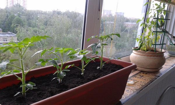 освещение для томатов