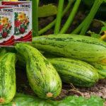 Чем можно подкормить кабачки в открытом грунте на разных стадиях вегетации