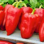 Характеристика и описание гибрида перца Джипси F1, выращивание и уход