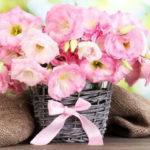 Выращивание цветка Эустома из семян в домашних условиях: когда и как сажать, уход