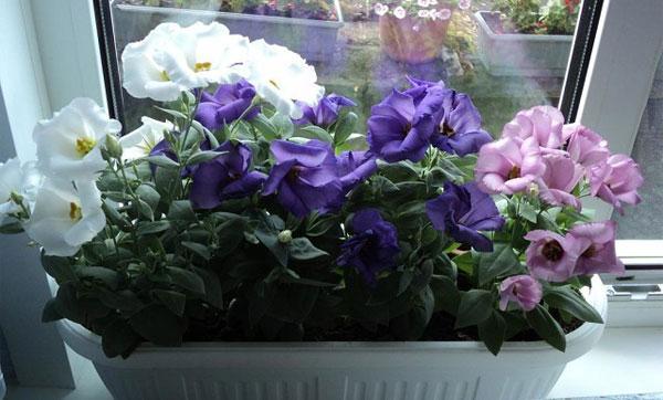 освещение для цветка