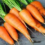 Характеристика и описание сорта моркови Каротель, выращивание и уход