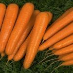 Характеристика и описание гибрида моркови Лагуна F1, выращивание и уход