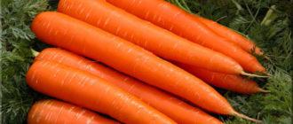 Характеристика и описание сорта Моркови Лосиноостровская 13, выращивание