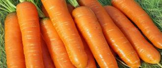 Характеристика и описание сорта моркови Нантская 4, выращивание и уход