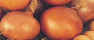 Характеристика и описание сорта лука Сеттон, выращивание и уход