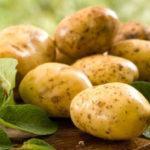 картофель Тулеевский