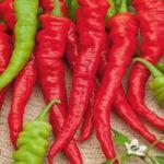 Характеристика и описание сорта перца Бараний рог, выращивание и уход