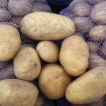 Характеристика и описание сорта картофеля Бриз, выращивание и уход