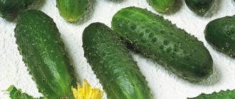Характеристика и описание гибрида огурца Маринда F1, выращивание и уход