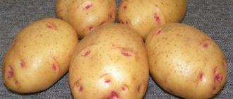 Характеристика и описание сорта картофеля Барин, выращивание и уход