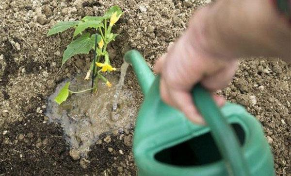 полив в открытом грунте