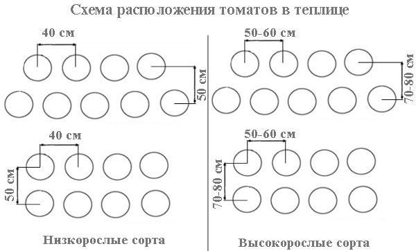 схемы расположения томатов
