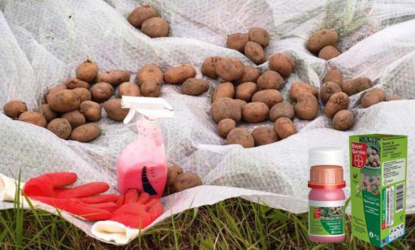 престиж для картофеля
