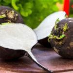 Полезные свойства черной редьки и противопоказания к ее употреблению
