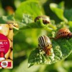 препарат жукоед для картофеля