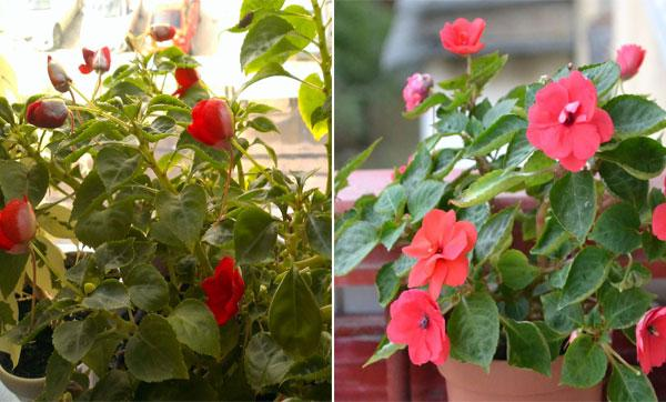 виды цветка