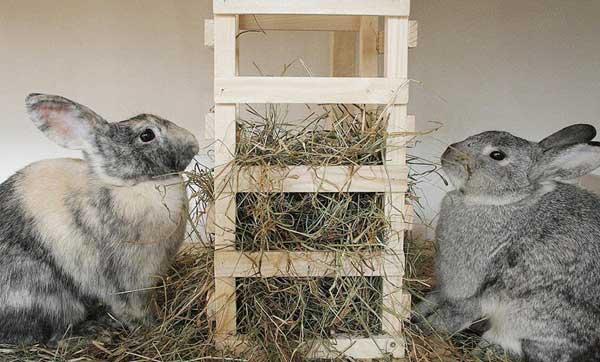 грубые корма кролику