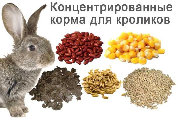 концентрированные корма кроликам
