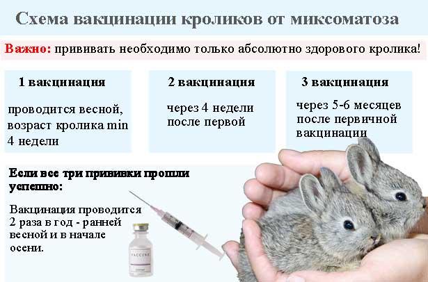 схема вакцинации от миксоматоза