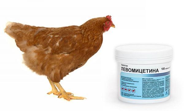 Левомицетин для кур дозировка на литр воды