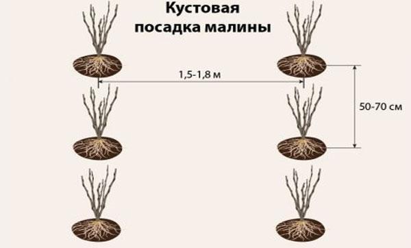 кустовой способ