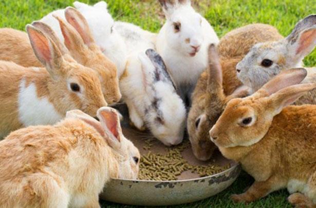 комбикорм кроликам