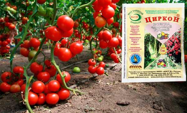 Циркон для томатов