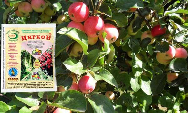 циркон для плодовых деревьев