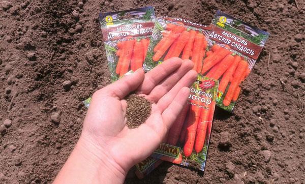 Морковь посадка и уход в открытом грунте под зиму