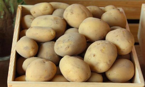 Какой сорт лучше картофель?